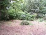 bylinná zahrada v minulosti